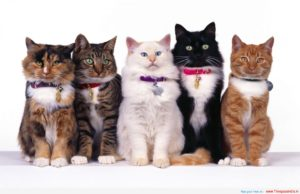 Cat Group