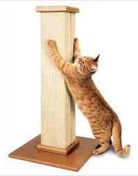 Cat Scratching Steady Post