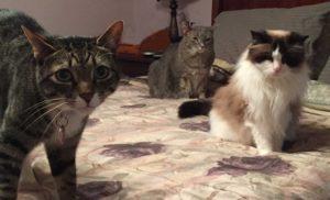 Three-Ferrara-Cats_cleaned_web