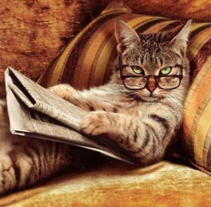 Smart Reading Cat
