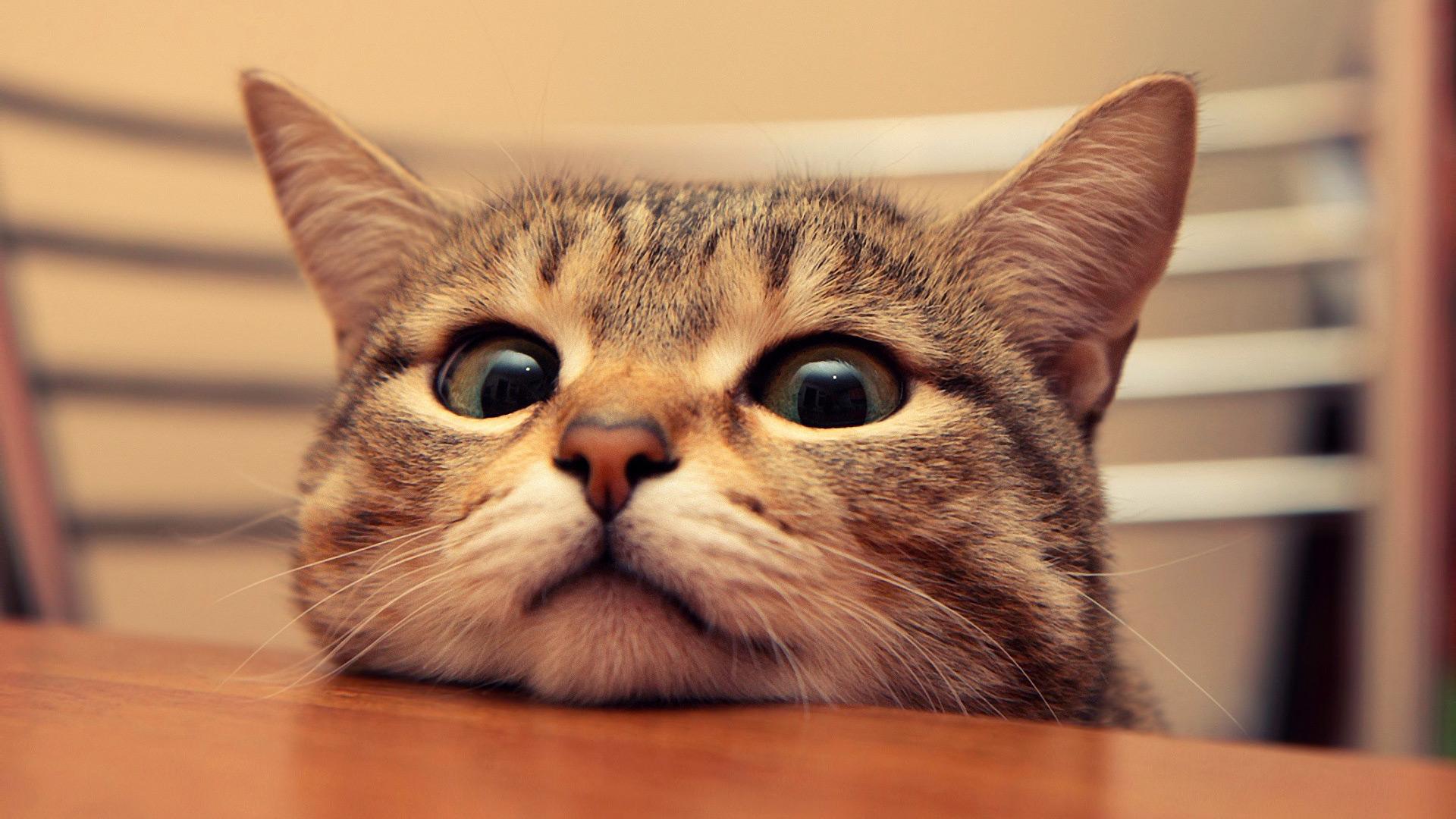 cute cat pix | pawsitive potential