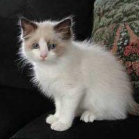 Cute Cat Pictures