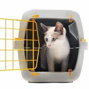 Getting Your Cat Into a Carrier